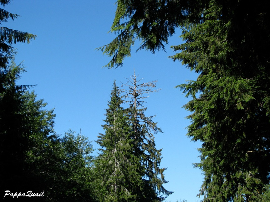 Olympic Eagle and nest wide