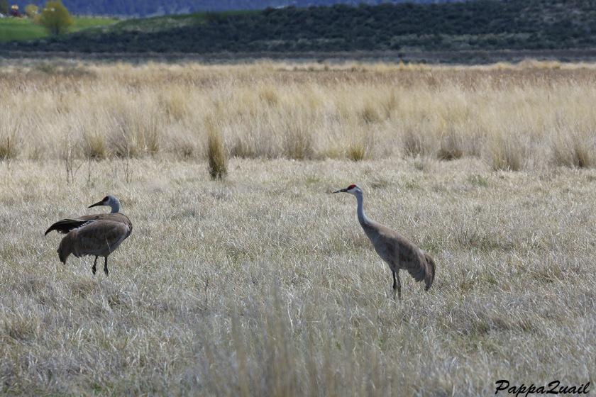 s-crane-modoc-pair