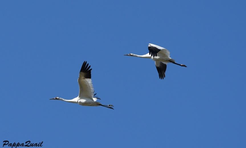 w-crane-2-pair