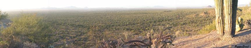 saguaro-2005