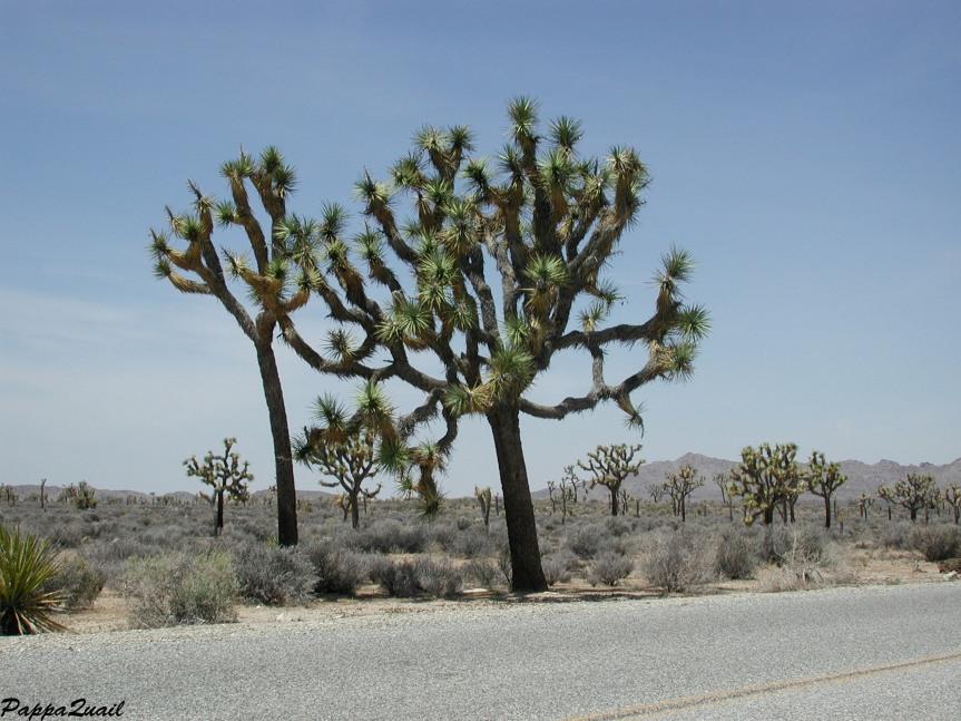 המדבר מתעורר – חלקשלישי