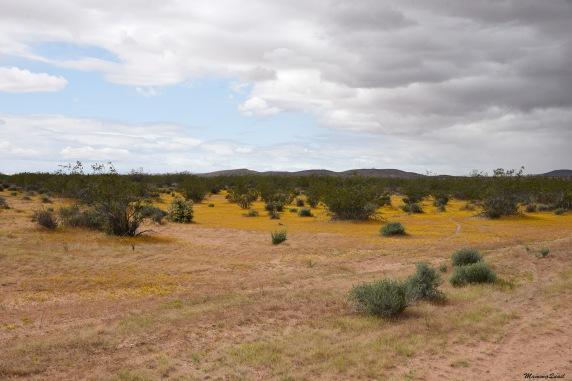 nn yellow mat