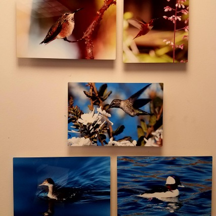 pictures on wall 1
