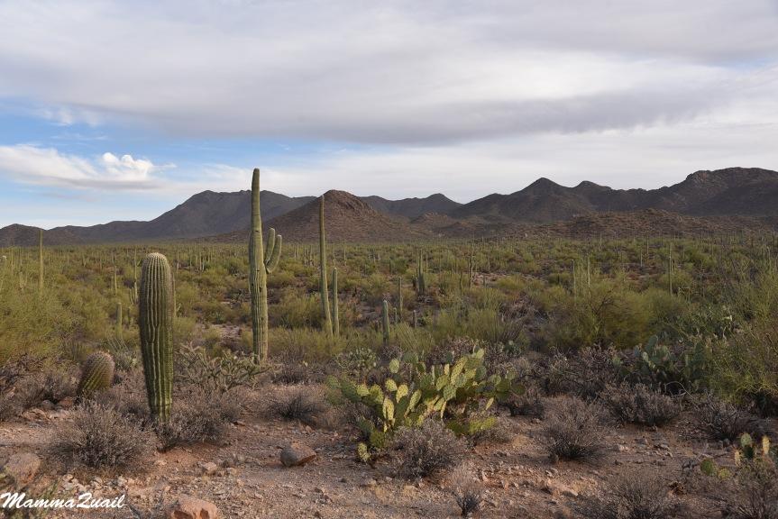 מסע לדרום אריזונה