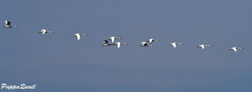 יומיים של ציפורים ליד סקרמנטו – היוםהראשון