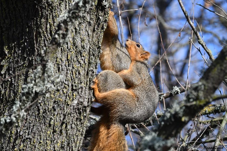v squirrel porn