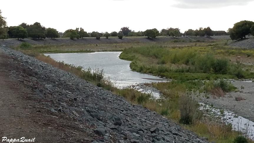 alameda creek view 1