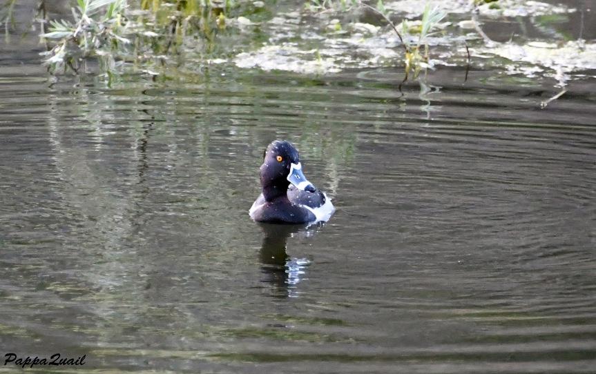 duck DSF_6625